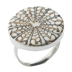 silver-shell-rings/earth-colored-spider-shell